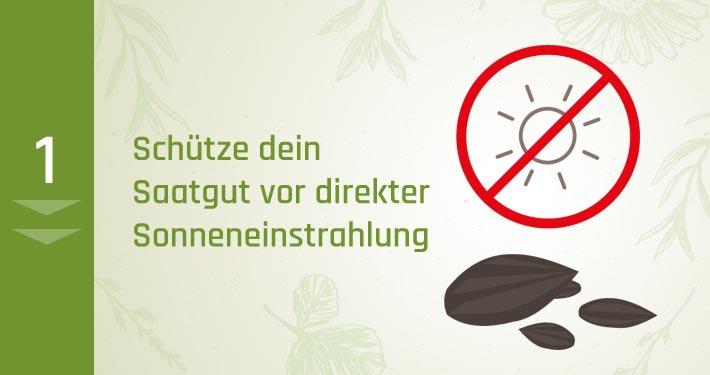 1. Schütze dein Saatgut vor direkter Sonneneinstrahlung