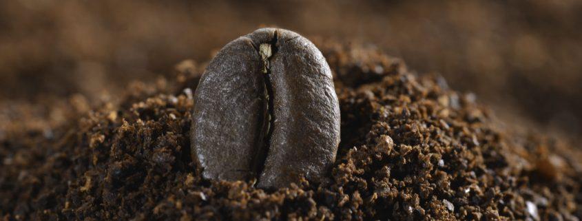 Blog-Beitrag Kaffeebohne in Kaffeepulver Kleines Beet