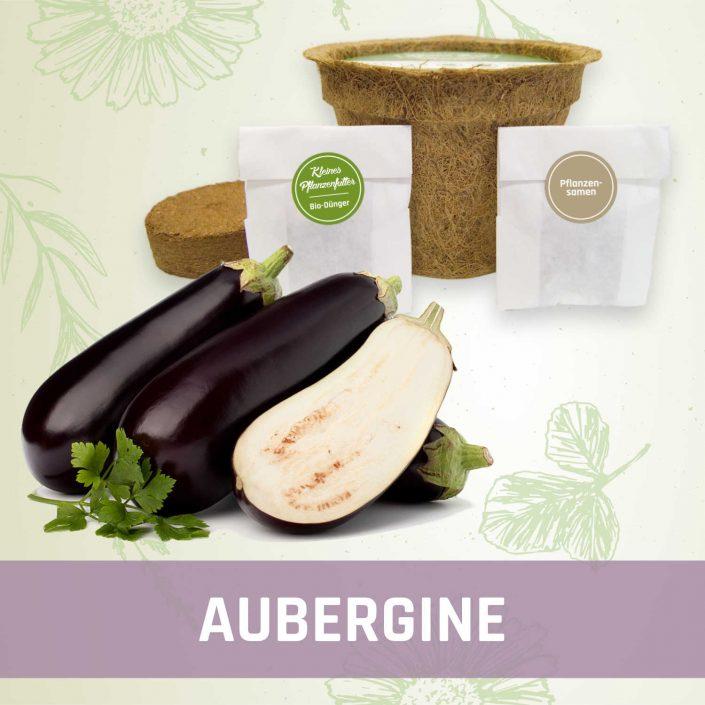 Produktfoto Aubergine Gemüse Kleines Beet