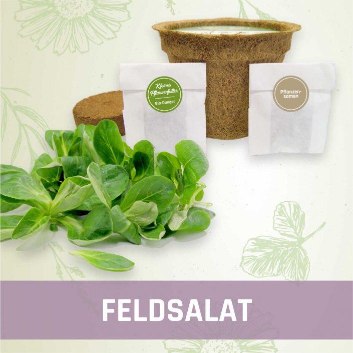 Produktfoto Feldsalat Gemüse Kleines Beet