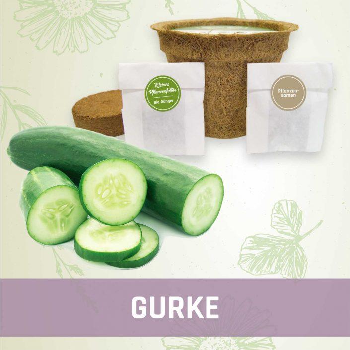 Produktfoto Gurke Gemüse Kleines Beet