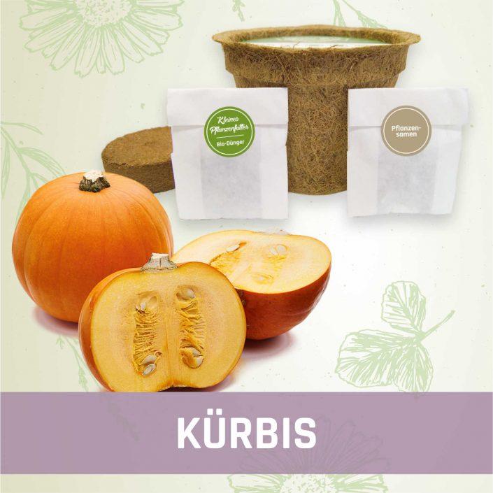 Produktfoto Kürbis Gemüse Kleines Beet