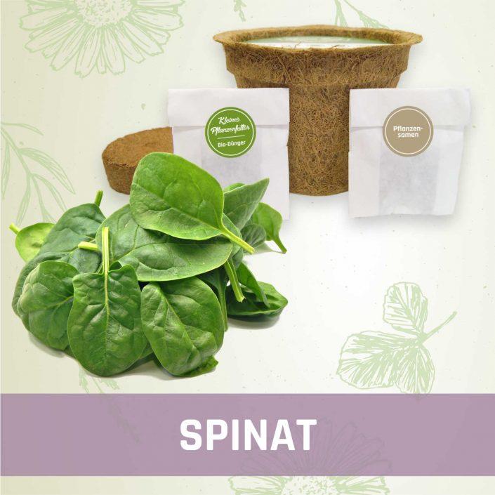 Produktfoto Spinat Gemüse Kleines Beet