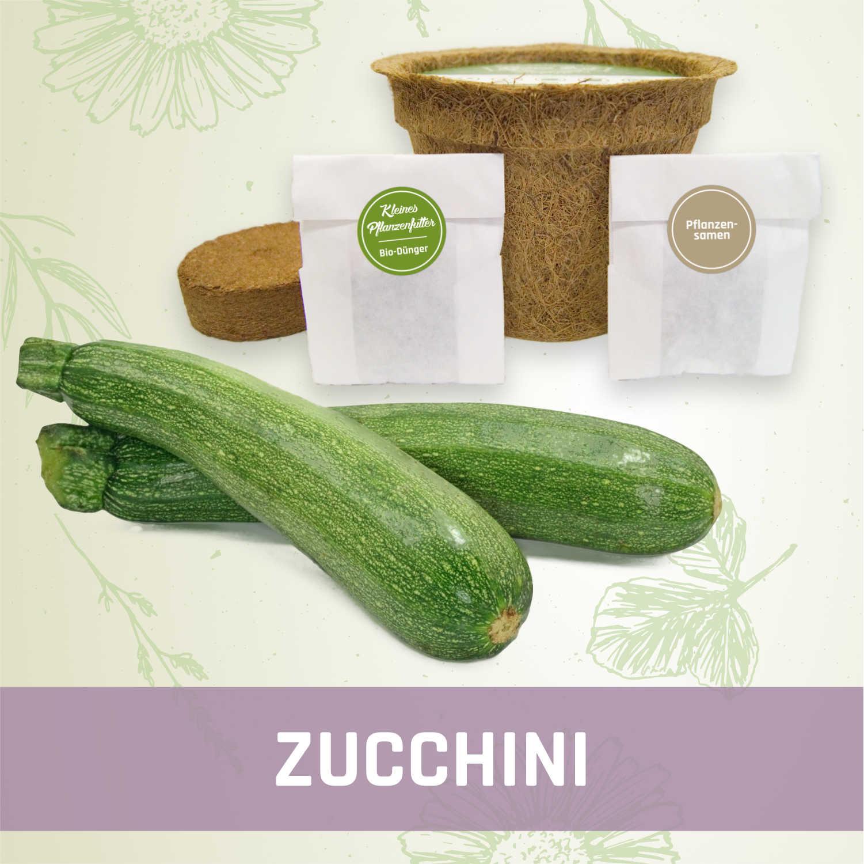 zucchini anzuchtset kleines beet online shop. Black Bedroom Furniture Sets. Home Design Ideas