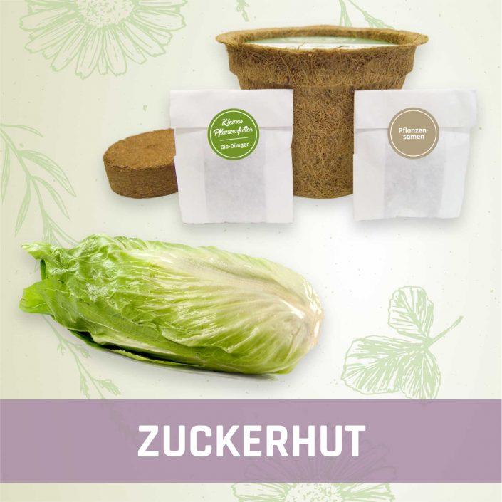 Produktfoto Zuckerhut Gemüse Kleines Beet