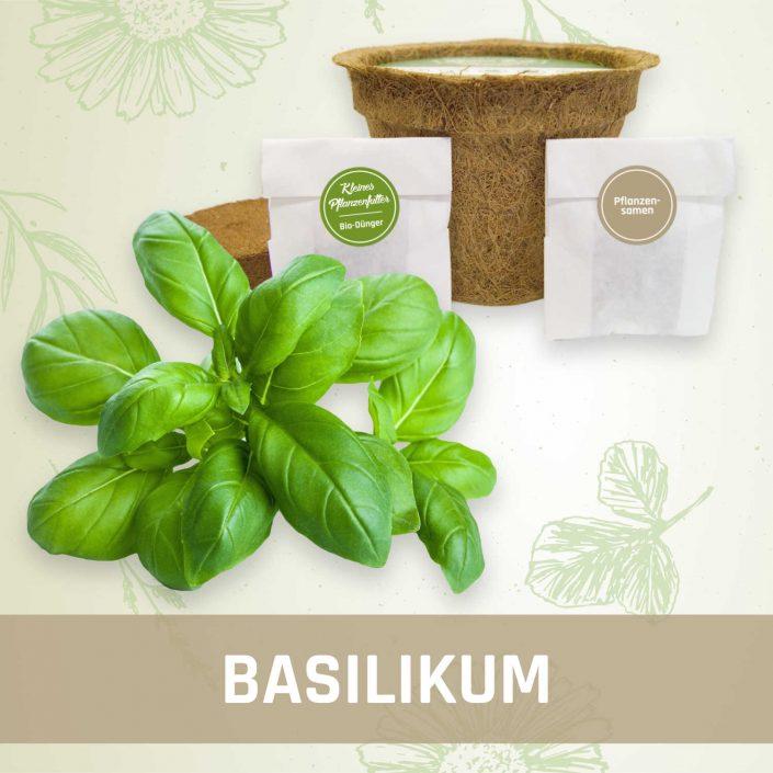 Produktfoto Basilikum Kräuter Kleines Beet