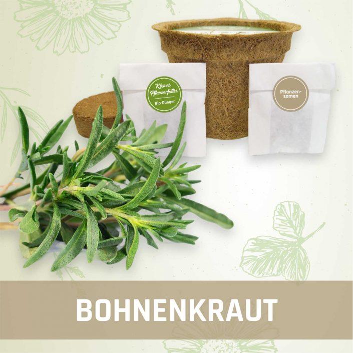 Produktfoto Bohnenkraut Kräuter Kleines Beet