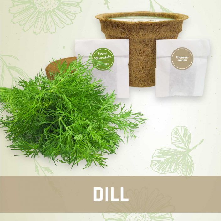 Produktfoto Dill Kräuter Kleines Beet
