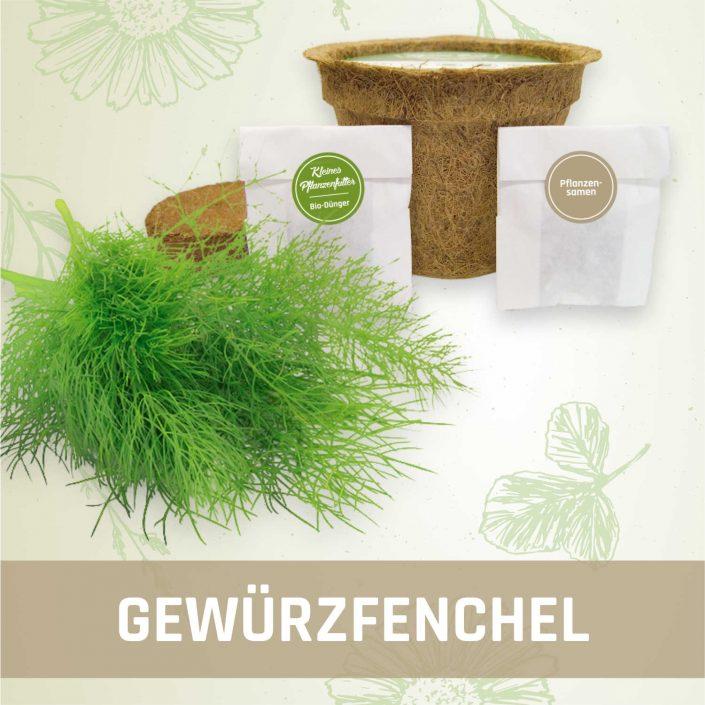 Produktfoto Gewürzfenchel Kräuter Kleines Beet