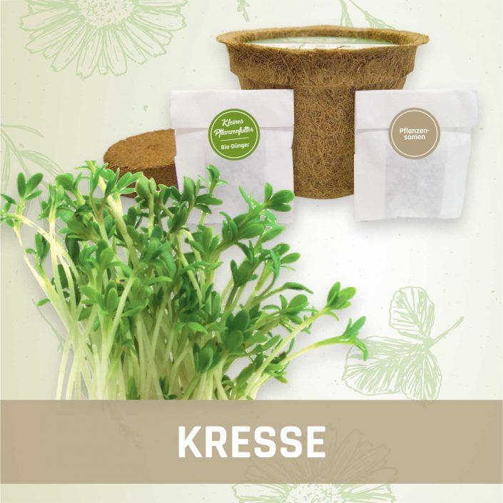 Produktfoto Kresse Kräuter Kleines Beet
