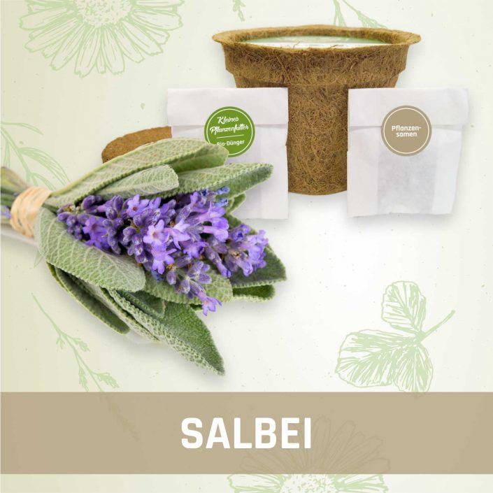 Produktfoto Salbei Kräuter Kleines Beet