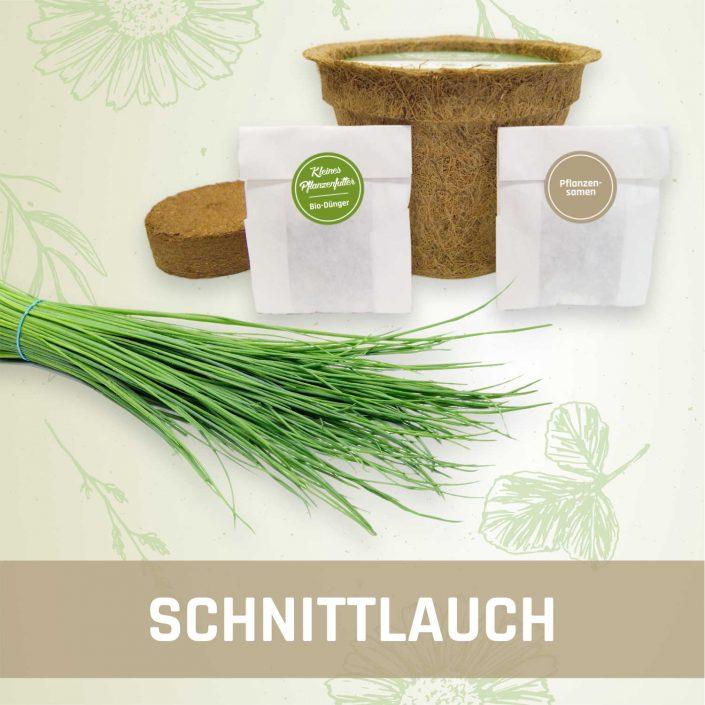 Produktfoto Schnittlauch Kräuter Kleines Beet