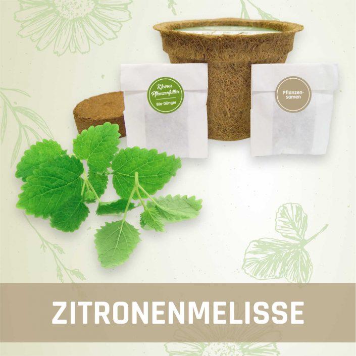 Produktfoto Zitronenmelisse Kräuter Kleines Beet