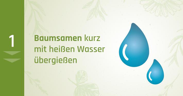 1. Baumsamen kurz mit heißen Wasser übergießen