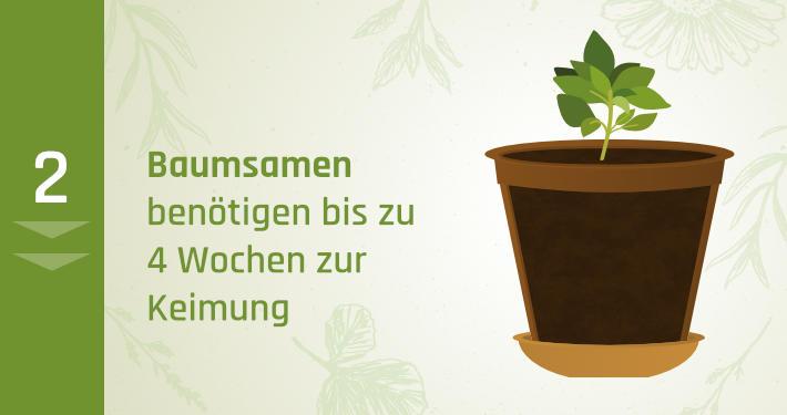 2. Baumsamen benötigen bis zu 4 Wochen zur Keimung
