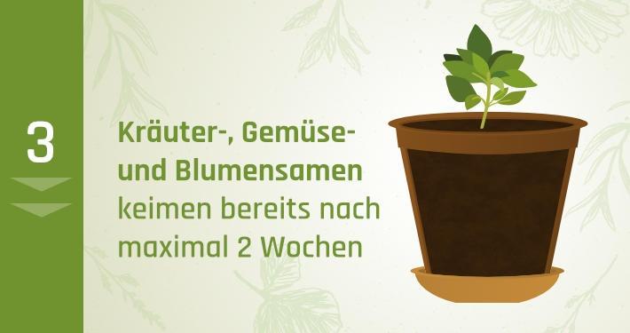 3. Kräuter-, Gemüse- und Blumensamen keimen bereits nach maximal 2 Wochen